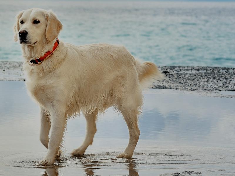 Lieblingsplatz Rügen Hunde sind willkommen
