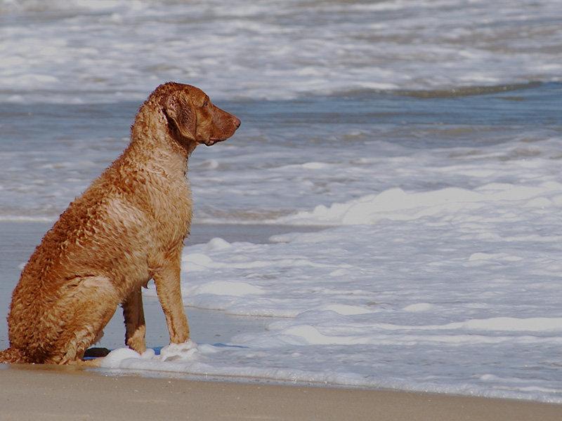Lieblingsplatz Travemünde Hunde sind willkommen